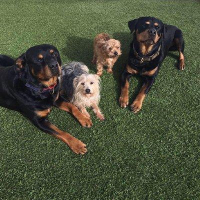 Form The Heart Dog Training